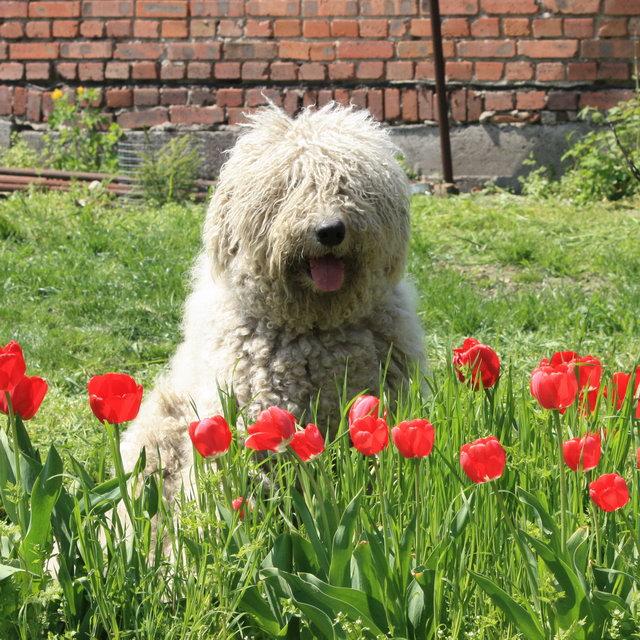 http://ws.pp.ru/110502-raf-tulip.jpg