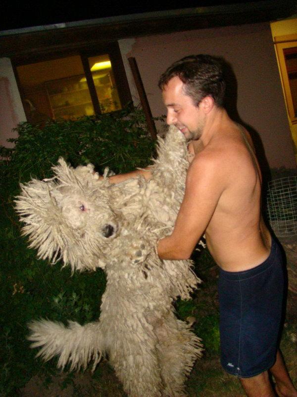 http://ws.pp.ru/foto/120928.4-komondor-dogbb.jpg